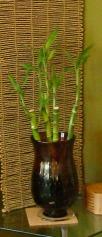 vase-cropped